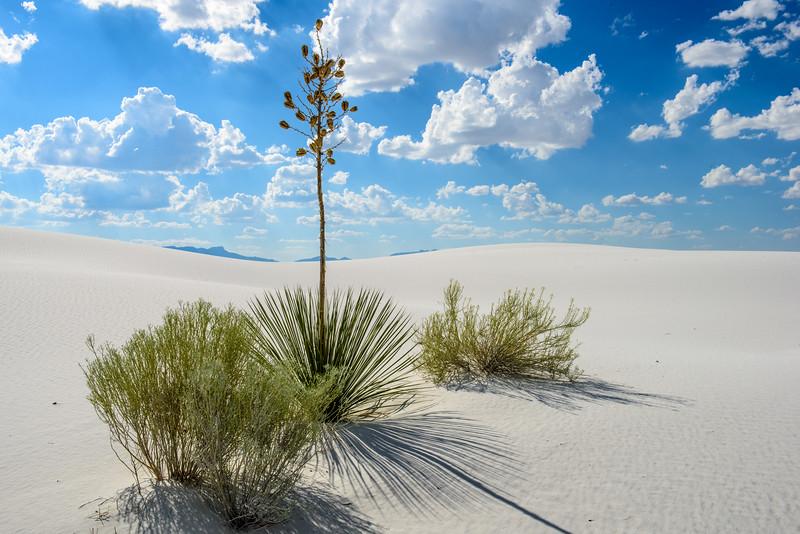 20160805 White Sands 007.jpg