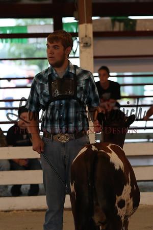 Thursday - 4-H Cattle Show