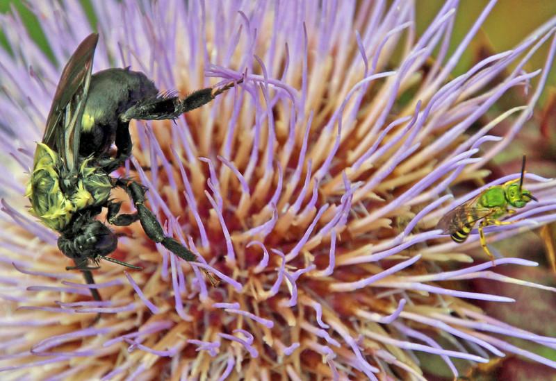 Bumble bee 35