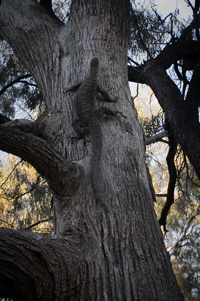 Nikolajsen-Gribdagen-Australia-31.jpg