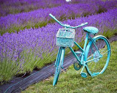 Indigo Lavender Farm 7/9/21