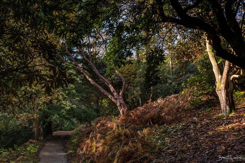 Wakehurst_Autumn-6097.jpg