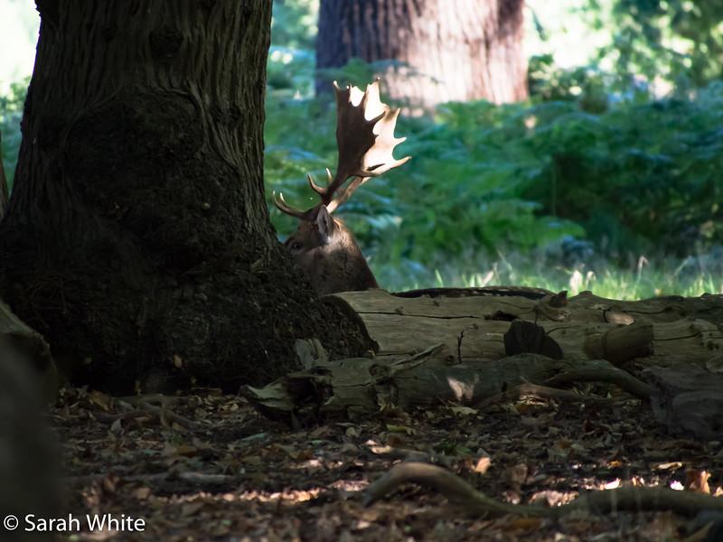Deer rut_260915_634.jpg