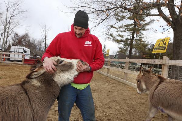 Backyard donkeys in Pelham 022920