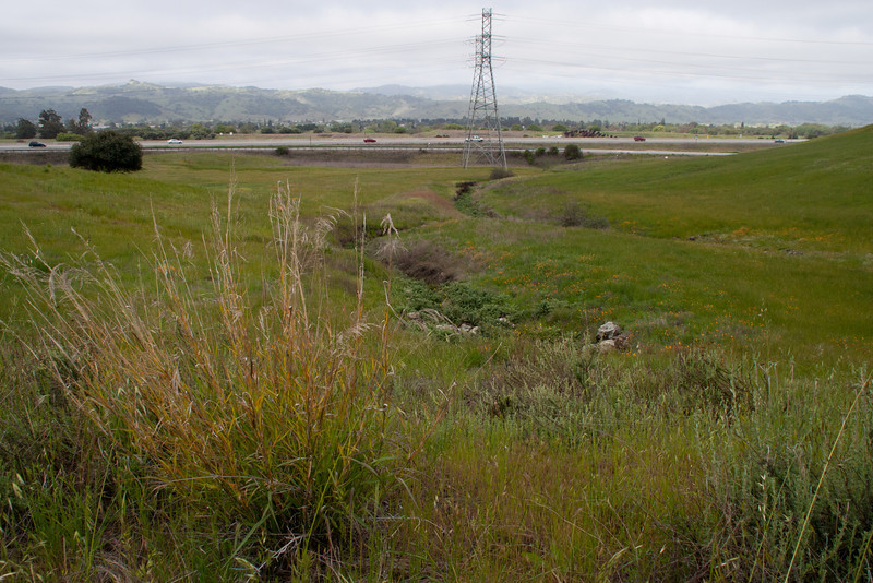 """""""Mitigated"""" area. Through several years of persistent work including goat grazing to remove star thistle, hand-pulling, selective spraying of selective herbicides, and mowing, this small acreage has been transformed from a thistle haven to a beautiful serpentine grassland with native wildflowers. U.S. Highway 101 below."""