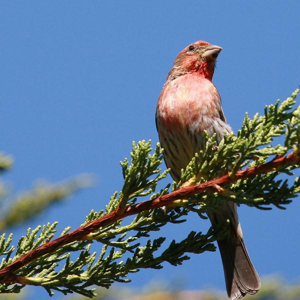 birds  652.jpg