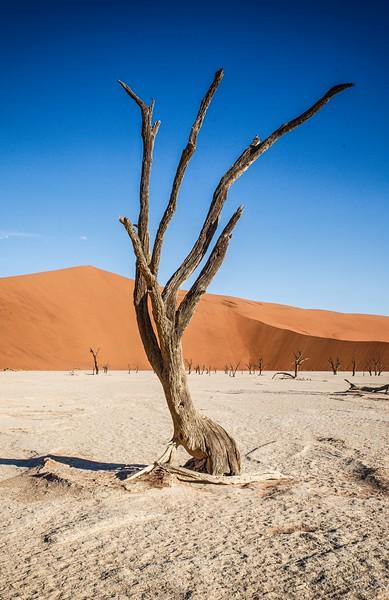 Namibia Baby-128.jpg