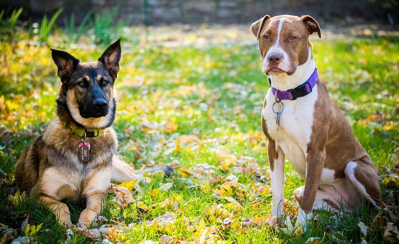 Dog kids 2.jpg