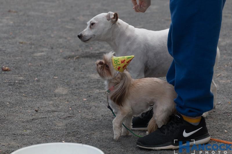 Odie 2nd Birthday Party-023.jpg