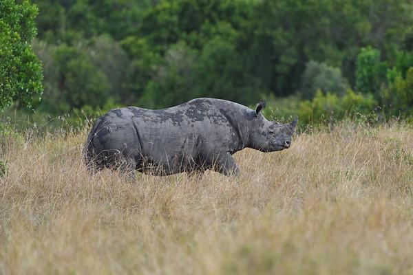 Rhino - קרנף