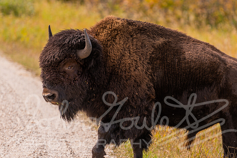 Riding Mountain National Park Nikon D780 2020-09-13