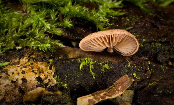 Lichens, Fungi, etc.
