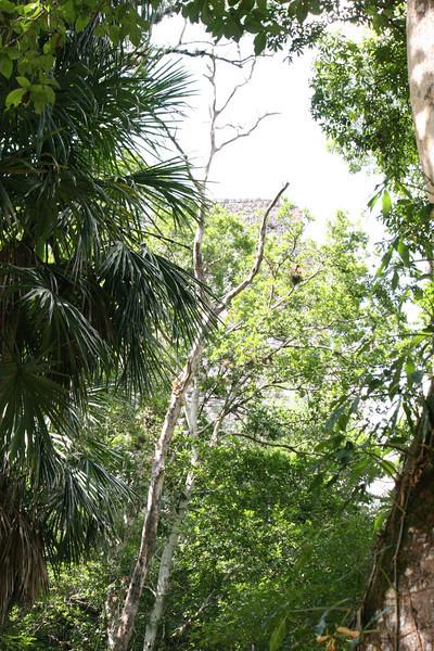 Guatemala Tikal 0 131.JPG