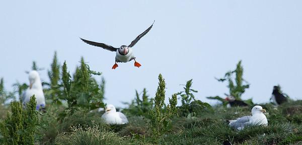 Birds of Newfoundland, Canada