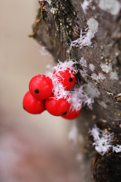 Berries and Seedpods