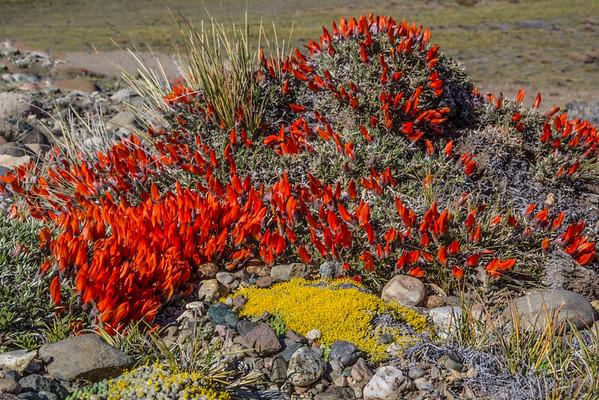 Argentina, South Patagonia