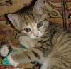 Zeli kitten.jpg
