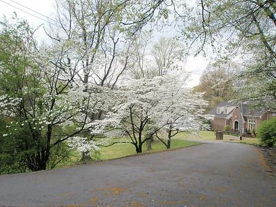 Dyersburg in the Spring