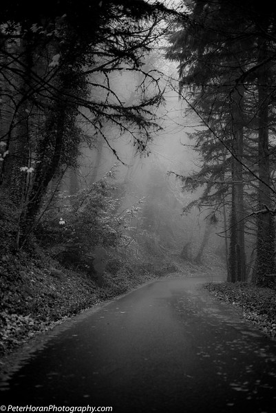 Ghost Trees (200 of 8).jpg