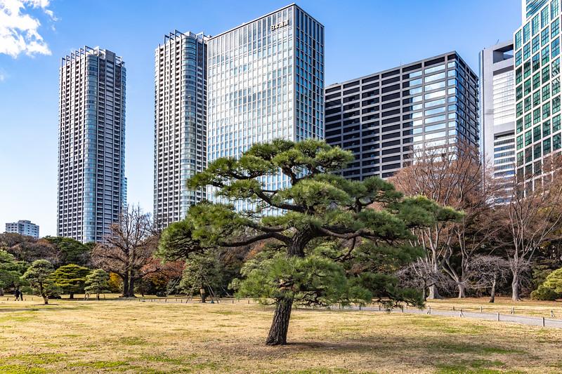 Tokyo12242018_403.jpg