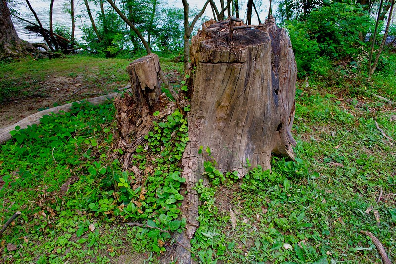 Tree Stump by water.jpg