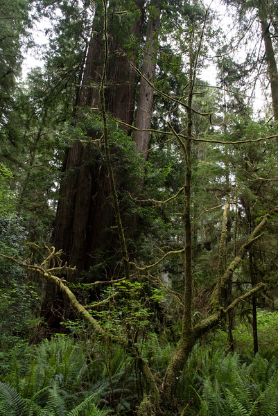 redwoodsFin29-1159.jpg