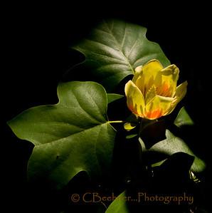 Flowers N Follage