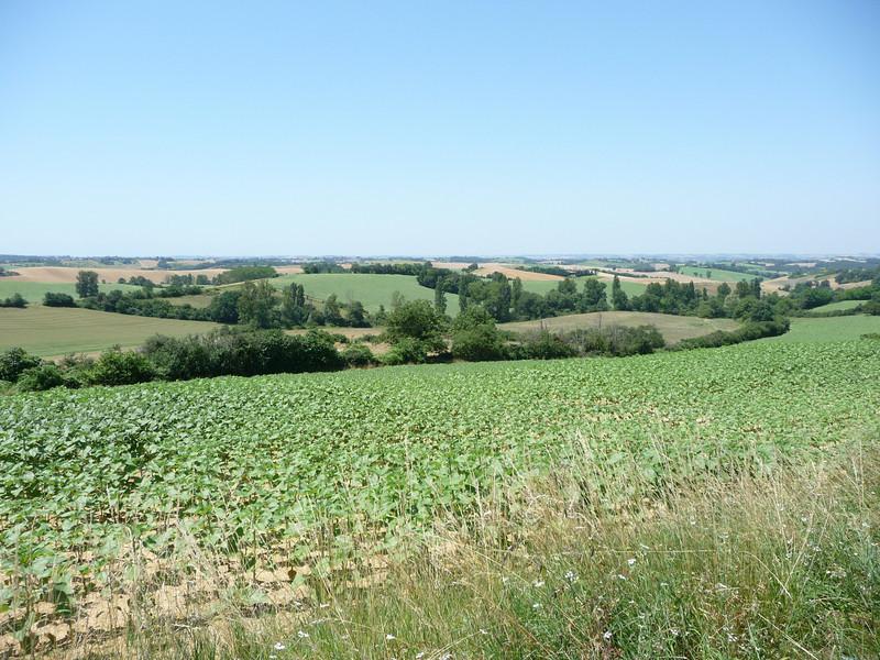 patchwork countryside in Midi-Pyrénées region