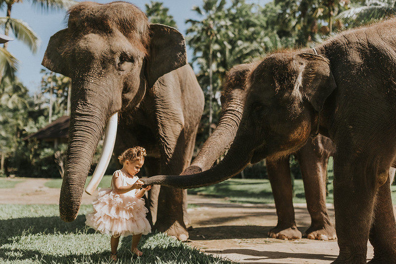 VTV_family_photoshoot_elephants_Bali_ (48).jpg