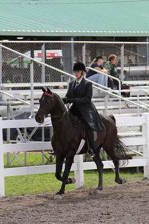 Saddleseat Sr