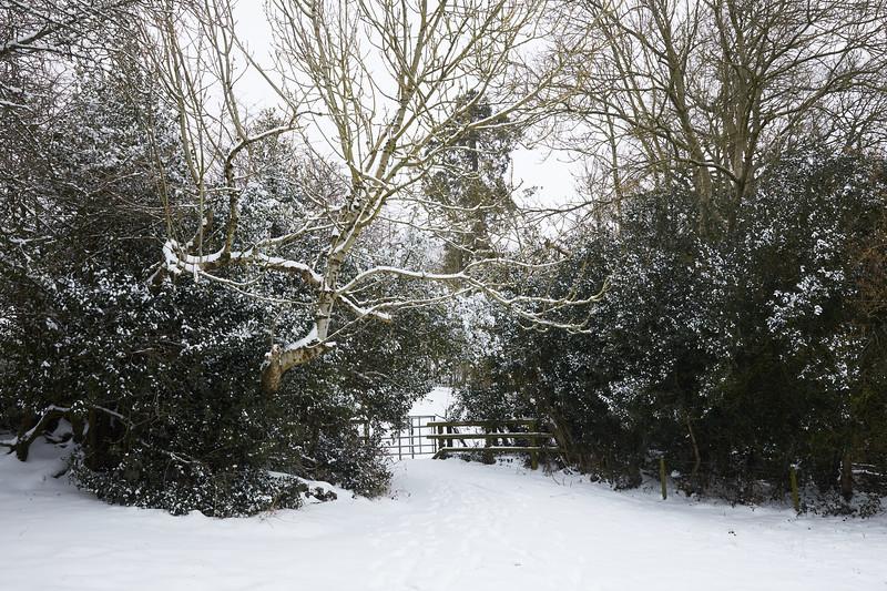 Snow Mar18 07.jpg
