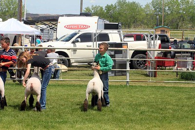 Junior Sheep Showmanship Sunday