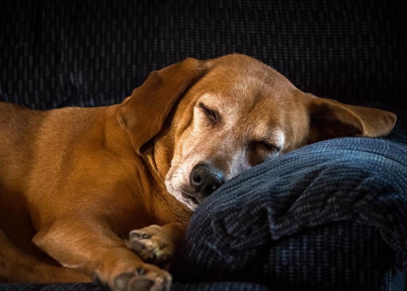 dogs dec 2015-2.jpg