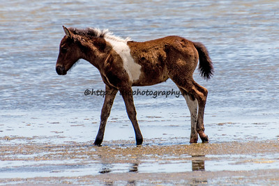 Gracey's Filly
