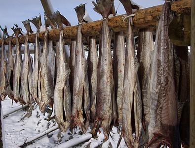 Værøy - winter fishing season
