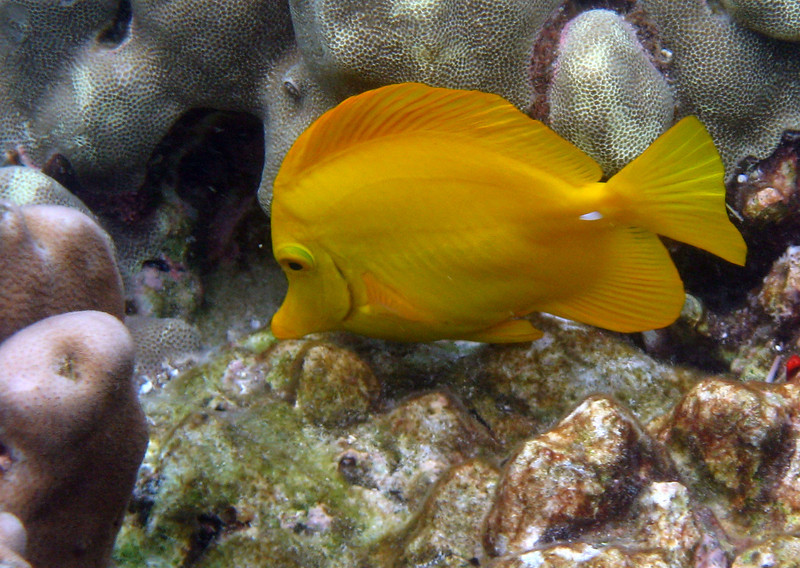 468- 20080416- Hawaii 20-Snorkelling IMG_0663.jpg