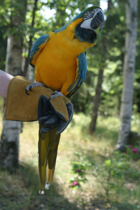MISC. BIRDS
