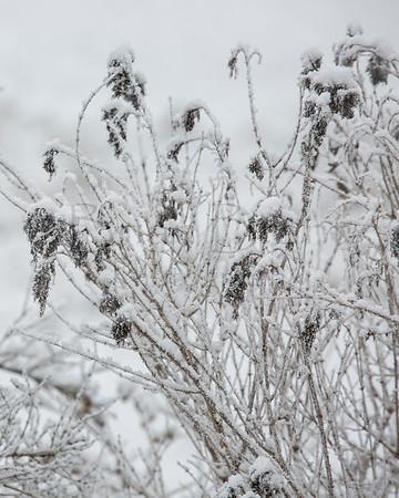 Snow - January 16 2021