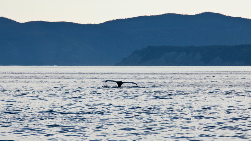 2011 quebec whale watching (67 of 80).jpg