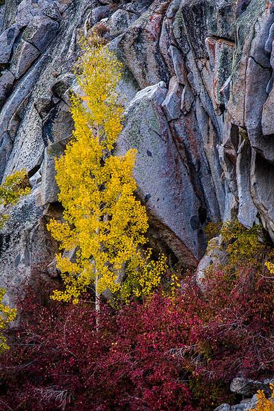 Eastern_Sierra_Fall_Gold_Red.jpg
