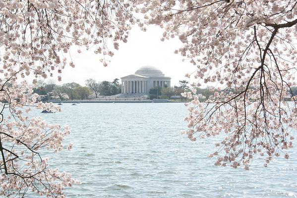 Washington D.C. Spring 2012