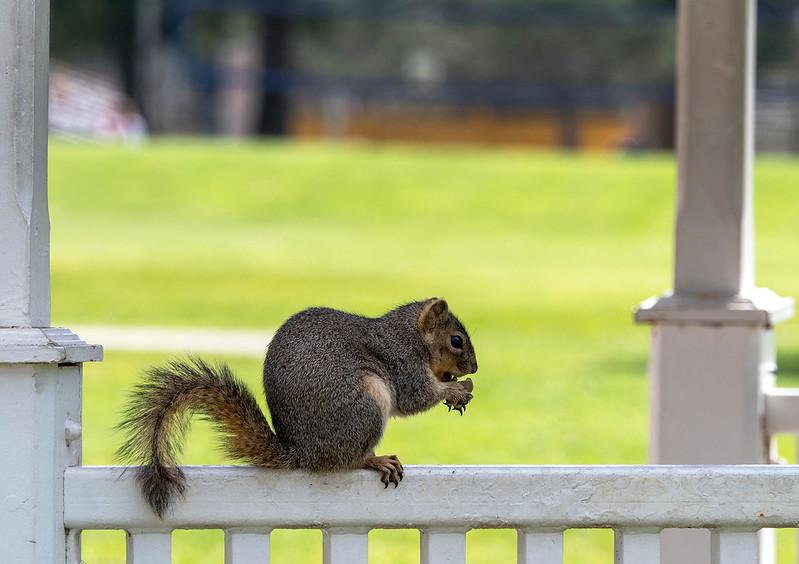 spring squirrel.jpg