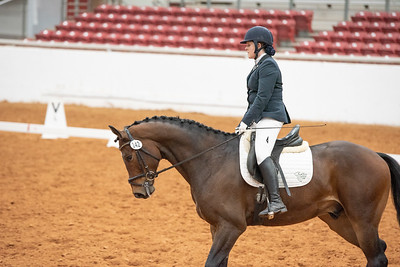 Horse 142