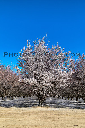 Almonds KERN COUNTY 2019