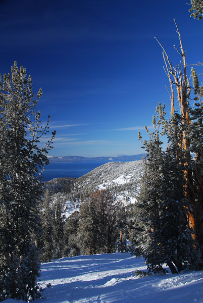 Lake Tahoe from the woods at Heavenly