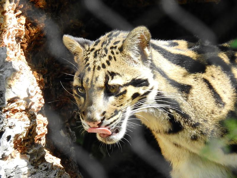 Denver Zoo 2018 (2639).JPG