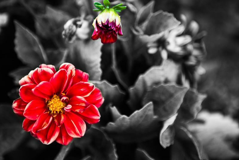 flower garden-8.jpg