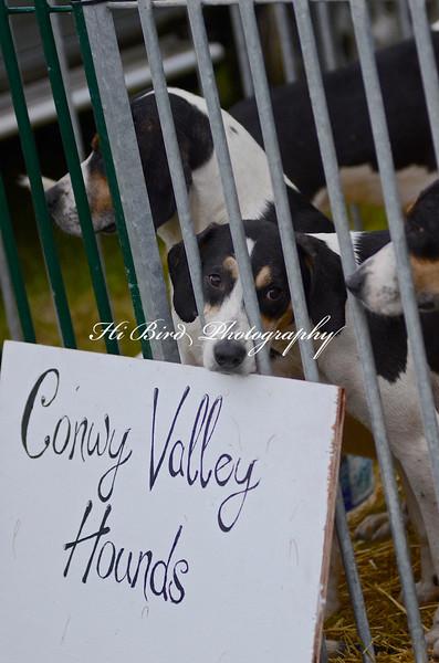 hounds 2271.jpg