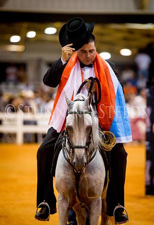 Fino Stallion Colt Championship