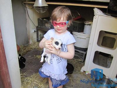 Ireland: Joyce County Sheepdogs